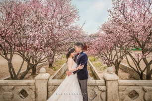 Pre-wedding Hong Kong Photo by Wade w. 首爾 自助婚紗 Seoul Sakura 櫻花